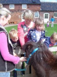 Meeting the nursery pony